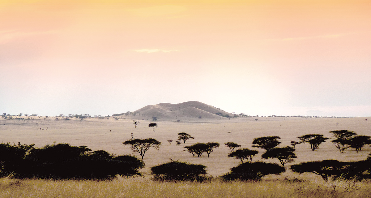 kenya landscape by tina broccoli